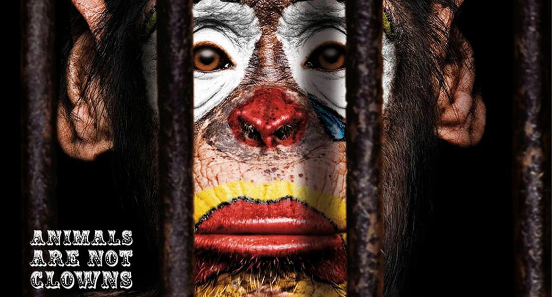 campaña que promueve circos sin animales