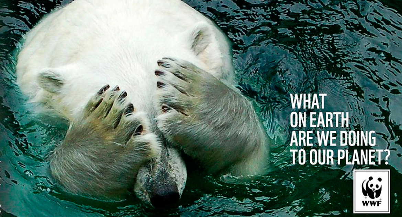 Oso polar como imagen de campaña contra el maltrato animal