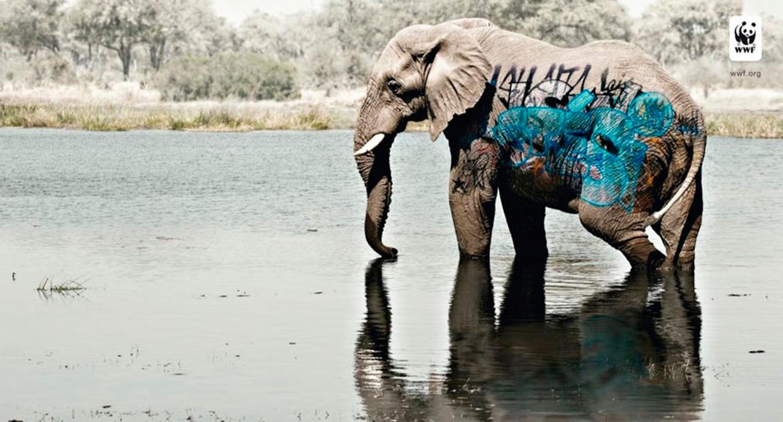 Elefante como imagen de campaña en contra del abuso contra animales