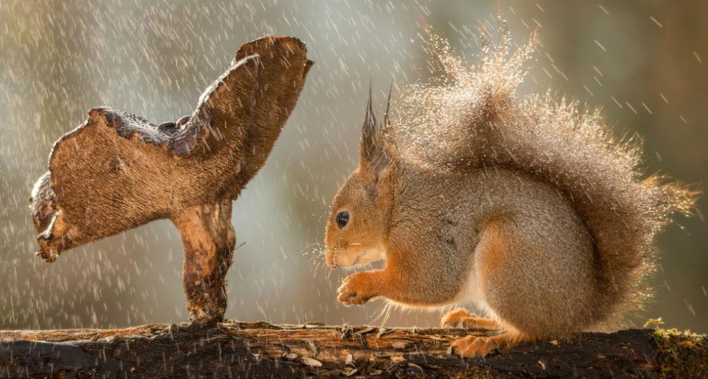 lluvia ardilla