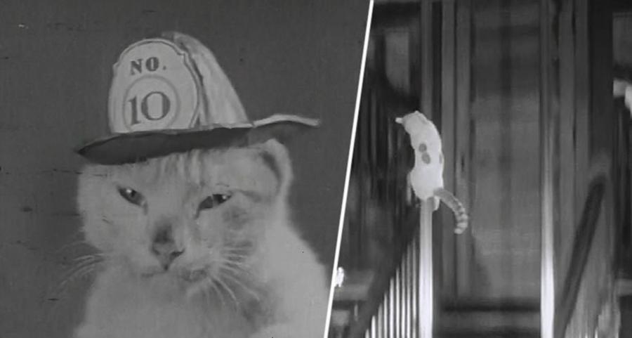 gato bombero