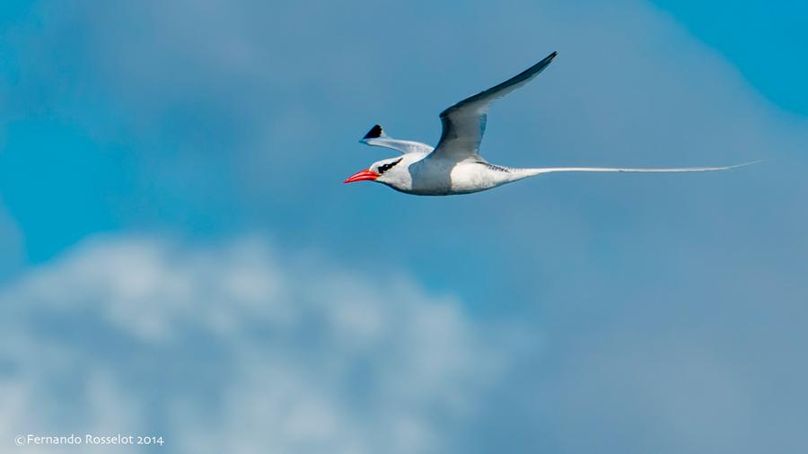Isla Pájaros 2