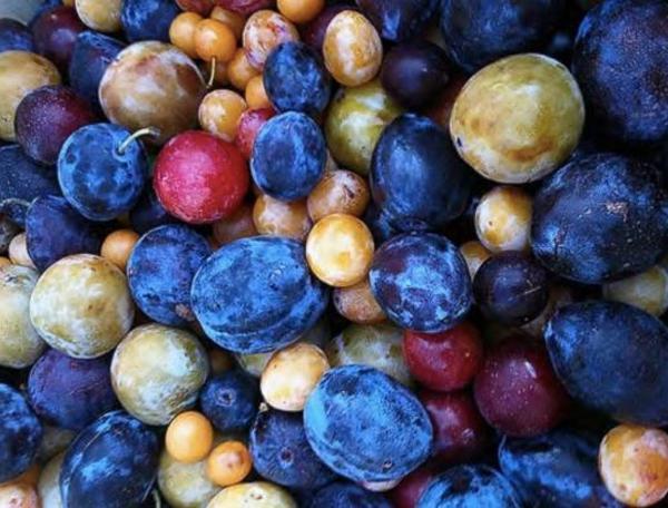 árbol de los 40 frutos